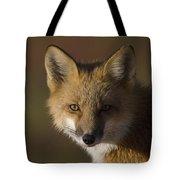 Red Fox Vulpes Vulpes Portrait, Alaska Tote Bag