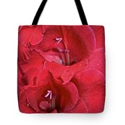 Red Gladiolus Tote Bag by Susan Herber