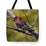 Red Head Black Tail Tote Bag