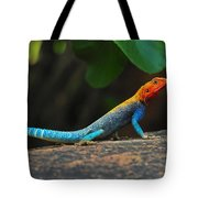 Red-headed Agama Tote Bag