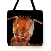 Red Imported Fire Ant Solenopsis Tote Bag