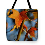 Red Leaves In Winter Sunset Tote Bag