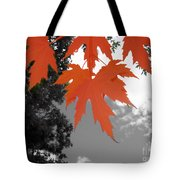 Red Maple Leaves Tote Bag