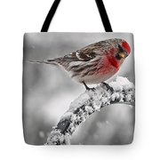 Red Poll - Cold But Hungry Tote Bag