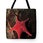 Red Sea Star And Limpet On Brown Rock Tote Bag