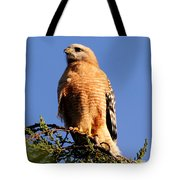 Pismo Beach Red Shoulder Hawk Tote Bag