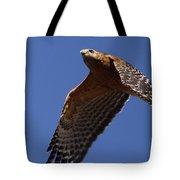 Red-shouldered Hawk - Apache Tote Bag