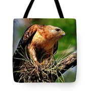 Red-shouldered Hawk With Breakfast Tote Bag
