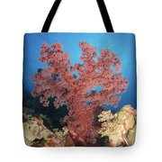 Red Soft Coral,  Australia Tote Bag
