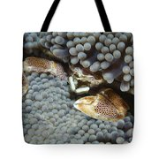 Red-spotted Porcelain Crab Hiding Tote Bag