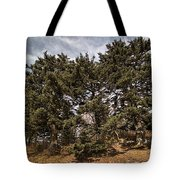 Red Spruce On Whitetop Mountain Tote Bag