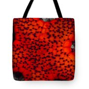 Red Starfish In Raja Ampat, Indonesia Tote Bag
