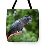 Red-tailed Black-cockatoo Tote Bag