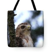 Red-tailed Hawk - Hawkeye Tote Bag