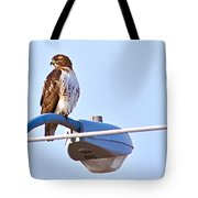 Red-tailed Hawk Perched Tote Bag