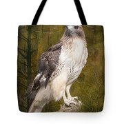Red Tailed Hawk Perched On A Branch In The Woodlands Tote Bag