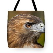 Red-tailed Hawk Portrait Tote Bag