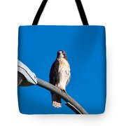 Red-tailed Hawk Surveying Territory Tote Bag