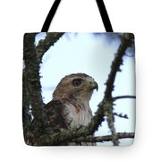 Red-tailed Hawk - Young And The Old Tote Bag