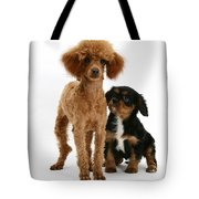 Red Toy Poodle And Cavalier King Tote Bag
