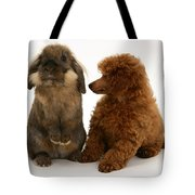 Red Toy Poodle Pup With A Lionhead Tote Bag