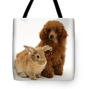 Red Toy Poodle Pup With Lionhead-cross Tote Bag