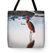 Reddish Egret Basking In The Sunset Tote Bag