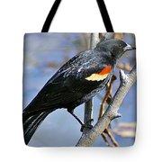 Redwinged Blackbird I Tote Bag
