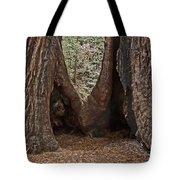 Redwood Feet Tote Bag