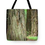 Redwood Trees Art Prints Big California Redwoods Tote Bag