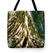 Redwood Trees Forest Art Prints Redwoods Tote Bag
