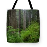 Redwoods Along Ossagon Trail Tote Bag