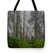 Redwoods In Breaking Mists Tote Bag