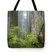 Redwoods In May Tote Bag