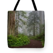 Redwoods Rising In Fog Tote Bag