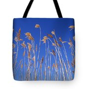 Reed Grass Tote Bag