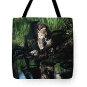 Reflection Of Lynx In Stream Idaho, Usa Tote Bag
