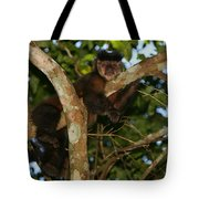 Relaxed - Brown Capuchin Tote Bag