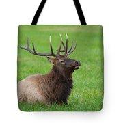 Resting Elk Tote Bag