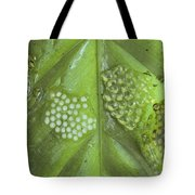 Reticulated Glass Frogs And Eggs Tote Bag