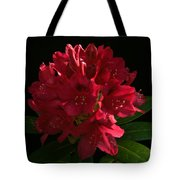 Rhododendron At Sunset 2 Tote Bag
