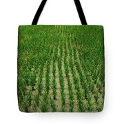 Rice Field Tote Bag