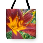 Ripe Blood Orange Tote Bag by Trish Hale