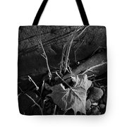 River Bed Sycamore Leaf Tote Bag
