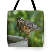 Robin Contemplating Getting In Tote Bag