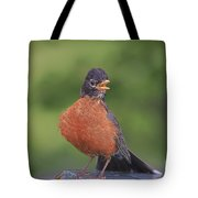 Robin In Distress Tote Bag by Deborah Benoit