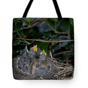 Robin Nestlings Tote Bag by Ted Kinsman