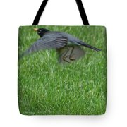 Robin With A Low Level Approach Tote Bag