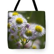Robin's Plantain - Alabama Wildflowers Tote Bag