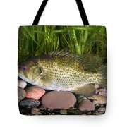 Rock Bass Tote Bag